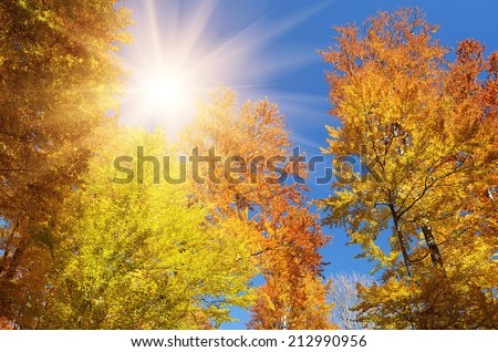 Beech forest on blue sky background. Bright colors of autumn. Branches with autumn leaves - stock photo