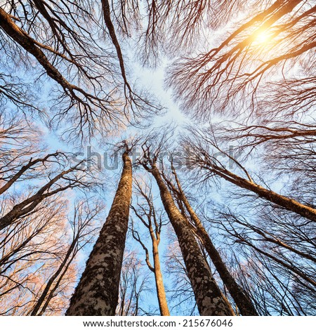 Beech forest on the sky background - stock photo