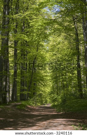 Beech forrest with fresh green leaves in spring - stock photo