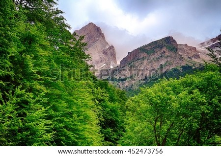 Beech tree and fir tree in Ordesa National Park in Spain - stock photo