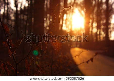 Beech Tree leaves in the winter while the Sun is setting