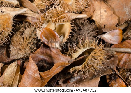 beechnut forest floor