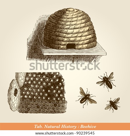 """Beehive - Vintage engraved illustration - """"Cent récits d'histoire naturelle"""" by C.Delon published in 1889 France - stock photo"""