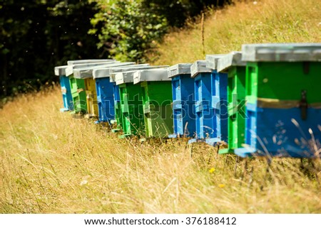 beehives and bees in the meadow - stock photo