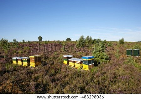 Beehives at National park 'De Veluwe', section 'Posbank', near the city of 'Arnhem', province of 'Gelderland', the Netherlands