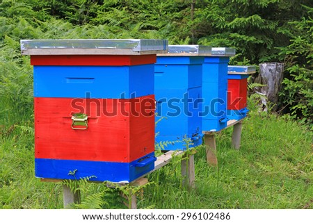 Beehives in a meadow near the forest - stock photo