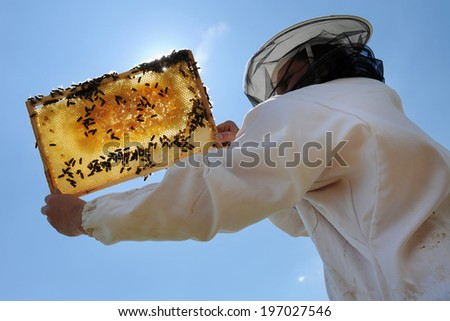 Beekeeper - stock photo