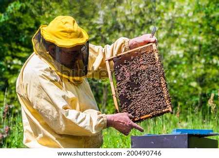 Beekeeper checking a beehive - stock photo