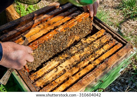 Beekeeper checking a beehive to ensure health of the bee colony or collecting honey. - stock photo