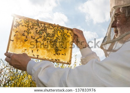 Beekeeper holds frame with honeycomb at bee colonyagainst the sun - stock photo