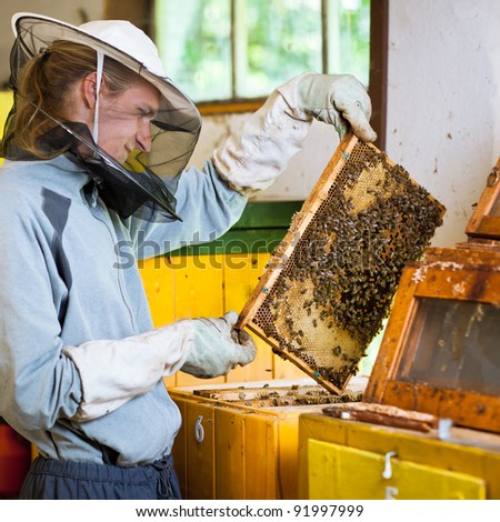 Beekeeper in an apiary holding a frame of honeycomb covered with swarming bees