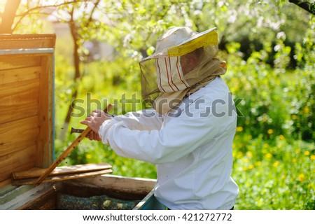 beekeeper on apiary - stock photo
