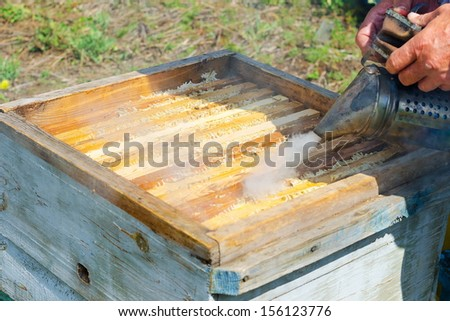 beekeeper smokes beehive before he takes out honeycomb frames