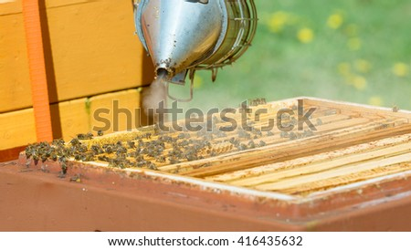 Beekeeper use a smoker to calm the honey bees (Apis mellifera) - stock photo