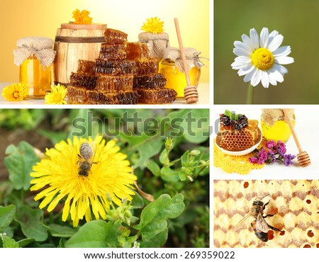 Beekeeping collage - stock photo