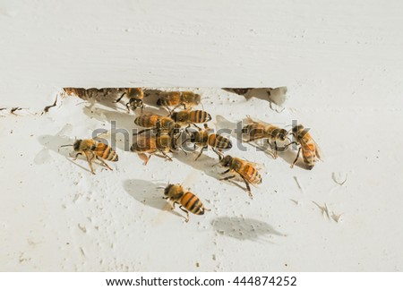 Beekeeping, The bees at front hive entrance, honeycomb in a wooden frame - stock photo