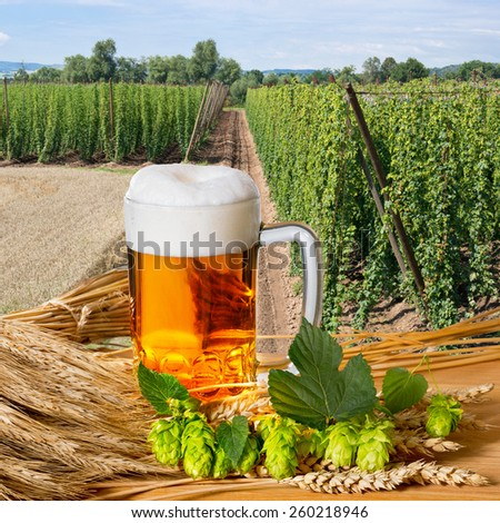 beer glass and raw material for beer production - stock photo