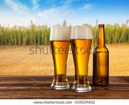 Beer glasses served on wooden desk with hop-field on background - stock photo