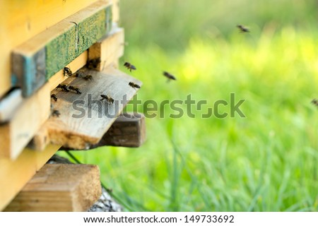 bees and beehive - stock photo