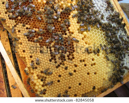 bees and mother of bees (with number) - stock photo