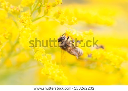 Bees are flying insects closely related to wasps, ants. Known for their role in pollination and producing honey beeswax. - stock photo