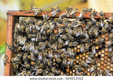 Bees collect honey over honeycomb on a background of wax - stock photo