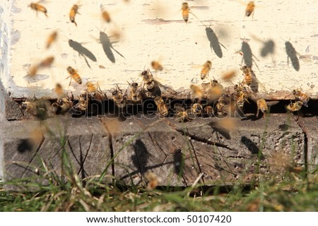 Bees coming and going from the entrance to a hive on a farm - stock photo