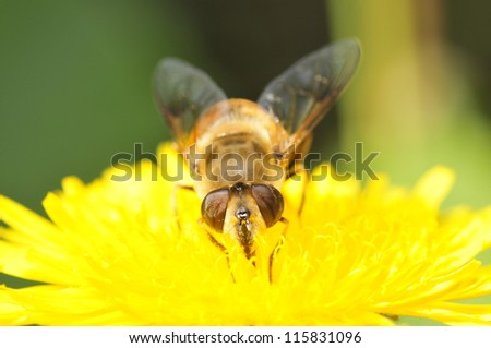 Bees gather nectar