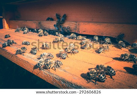 Bees in beehive - stock photo