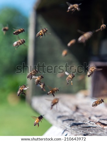 Bees in flight near beehive - stock photo