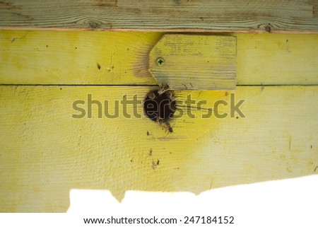 Bees in the house - stock photo