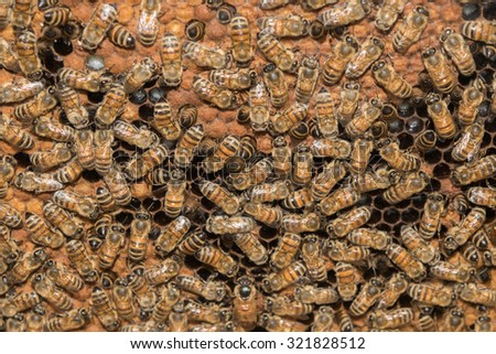 bees inside beehive while making honey detail - stock photo
