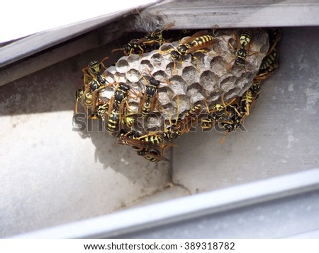 Bees on hive close up - blur - stock photo