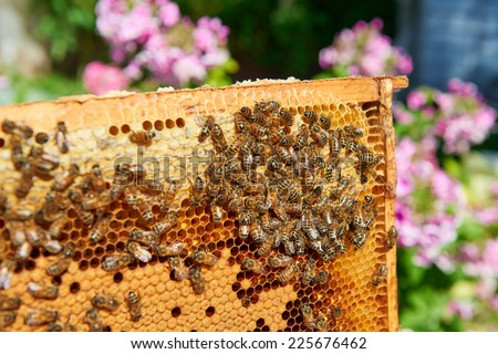 Bees on honeycomb and one wasp - stock photo