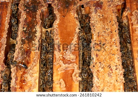 Bees on honeycomb in a beehive - stock photo