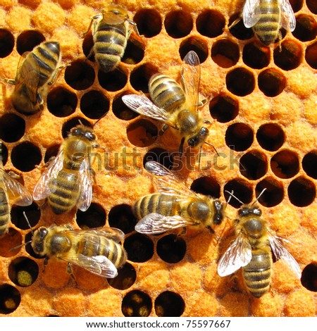 Bees working on honey cells. Close up macro. - stock photo
