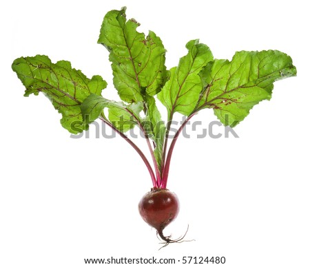 Beet root isolated on white background - stock photo