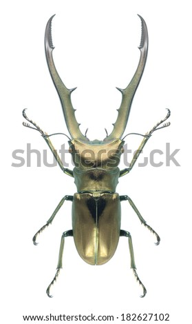 Beetle Cyclommatus metallifer (Stag beetle) (male) on a white background - stock photo