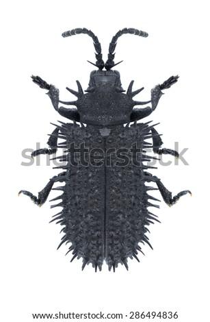 Beetle Hispa atra on a white background - stock photo