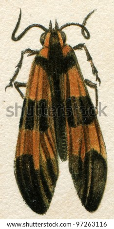 """beetle imitating inedible beetles - an illustration t article """"Mimicry"""" of the encyclopedia publishers Education, St. Petersburg, Russian Empire, 1896 - stock photo"""
