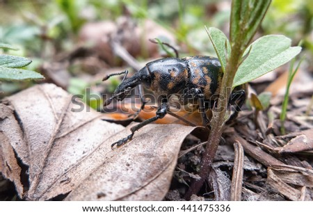 Beetle in forest. Macro insect. - stock photo