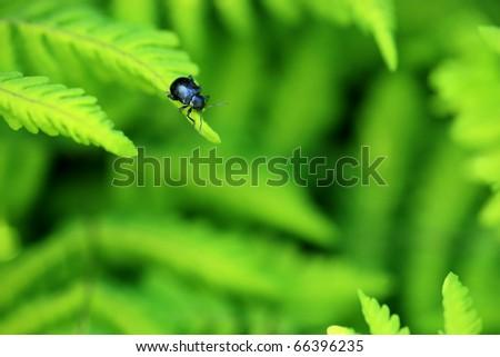 Beetle on ferns - stock photo
