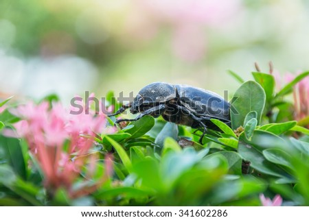 Beetle on green leaves and bokeh background - stock photo