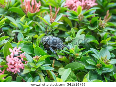 Beetle on green leaves of flower - stock photo