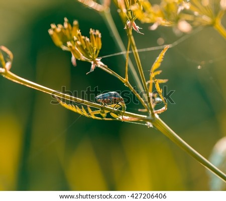 Beetle sitting on plant. Macro of insect in golden light. Natural background with plant and insect - stock photo