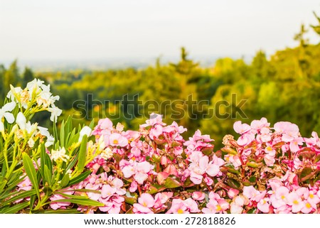 begonias, Flowers, green weeds, leaves, plants and trees on vineyards backgrounds on cultivated hills in Italian countryside the small village of Dozza near Bologna in Emilia Romagna - stock photo