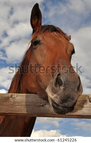 behind the fence - stock photo