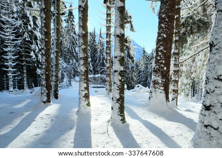 stock-photo-behind-the-trees-in-a-lovely