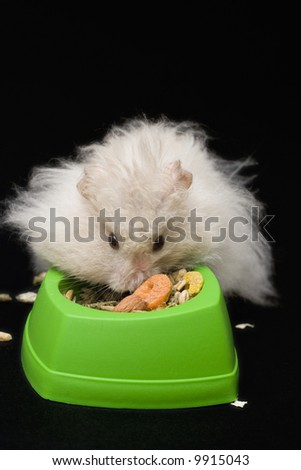 beige teddy bear hamster eating from green bowl