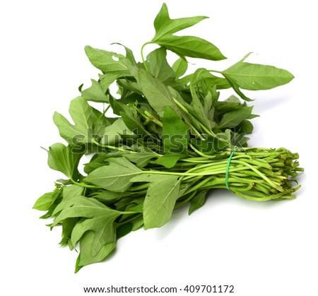 Belacan Yam Leaf (Sweet Potato Leaf) isolated on white